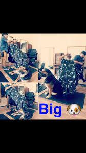 hugedog sur twipost com