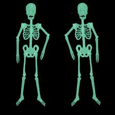 online buy wholesale halloween decorations skeletons from china