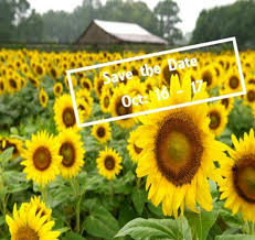 sunflowers for sale barn sale time in chattanooga tennessee