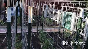 okietv diy best alternative to tomato cages vertical plant