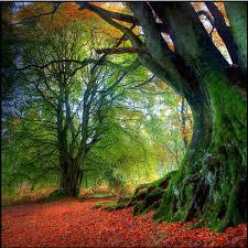 crowgyrls trees