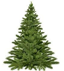 live christmas tree why you should plant a live christmas tree instead of a cut tree