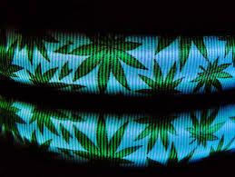Light Up Dog Collar Marijuana Dog Collar Cannabis Pot Leaf Collar Colorado 420