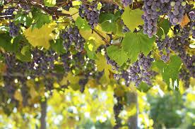 Arkansas how to travel images Travel the arkansas wine trail jpg
