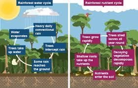 rainforest terrarium assignment