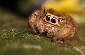 the world u0027s cutest spiders u2013 pinkbananamilk
