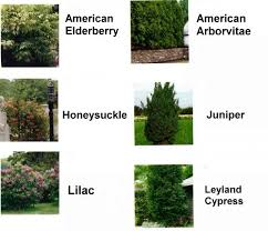 Bushes For Landscaping Choosing Bushes Trees Shrubs For Landscaping Shrubs And Bushes