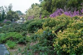 Santa Ana Botanic Garden by Share Our Garden Virtual Road Trip Rancho Santa Ana Botanic Gardens
