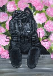 belgian sheepdog artwork belgian sheepdog belgian malenois belgian tervuran artwork by
