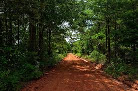 Alabama Forest images Free photo landscape dirt road trees red clay alabama forest max jpg