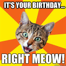 Birthday Cat Meme - it s your birthday right meow cat meme cat planet cat planet
