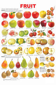 fruit chart 1 online in india buy at best price from firstcry com