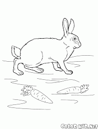 coloring page rabbit on the meadow