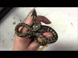 Baby Carpet Baby Jungle Jaguar Carpet Pythons Youtube