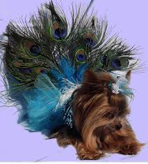 Halloween Costumes Yorkies Dogs 238 Pet Costumes Images Pet Costumes Costume
