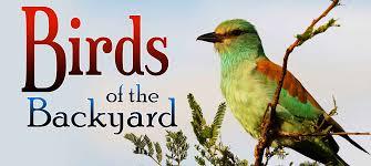 birds of the backyard pure flix
