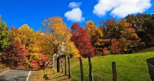 8 trees shrubs brilliant autumn color avenue