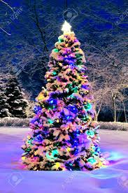 tree with lights snowy everest frosted green fir