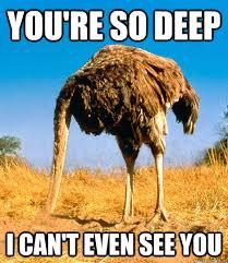 Ostrich Meme - ostrich memes 28 images hey you ostrich meme generator