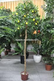 Mango Boom tropische mango bomen voor koop goederen groothandel
