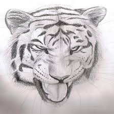 pencil sketch tiger by finchwing on deviantart
