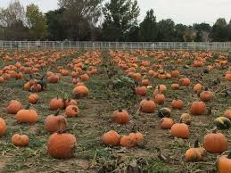 halloween city littleton co the denver colorado area pumpkin patches corn mazes hayrides