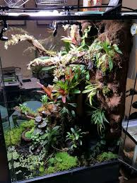 best 25 gecko vivarium ideas on pinterest lizard terrarium