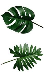 Tropical Plant Biology - 15 diy how to make your backyard awesome ideas 11 justina