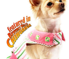 chihuahua sweaters chihuahua clothes accessories apparel chihuahua store