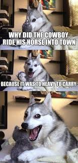 Meme Generator Confession Bear - i wish my dog would tell me jokes like this funny pinterest