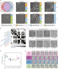 a comprehensive crispr based functional analysis of essential