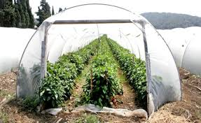 grow food all winter with a hoop house ecowatch