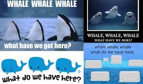 Whale Meme - randomly funny whale whale whale yayomg