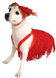 mardi gras jester ribbon dog mardi gras dog sweater costume craze