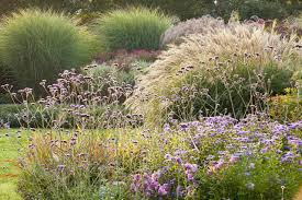 miscanthus sinensis japanese silver grass