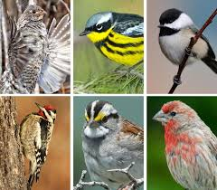 scores of bird species at risk from climate change study finds