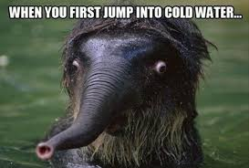 Funny Animal Pictures Memes - 27 funny animal memes that are sure to brighten your day