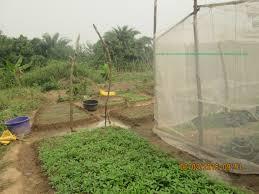 growing dry season vegetables successfully updated kalu