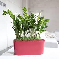 Plants For The Bedroom by 35 Best Indoor Plants Melbourne Images On Pinterest Melbourne