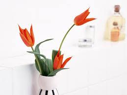 Flower Com Minimal Wallpapers Free High Quality Flower Wallpaper