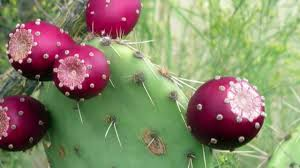martini pear prickly pear martini recipe youtube