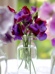 sweet peas flowers how to grow sweet peasindulging floral passions