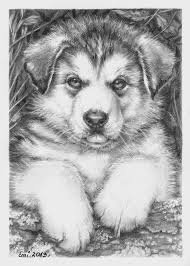 pencil sketches of puppies husky puppy colouring pages animals