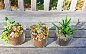 succulent terrariums indoor mini gardens cape fear botanical