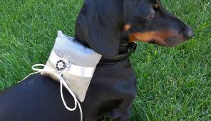 thanksgiving proposal ideas 15 ways to include your dog in your marriage proposal u2013 iheartdogs com