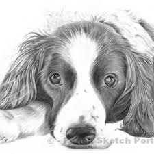 tag for drawings of puppies puppy drawings easy cute