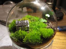 stylish best terrarium plants u2013 outdoor decorations