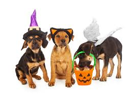 a pair of halloween events for furry friends