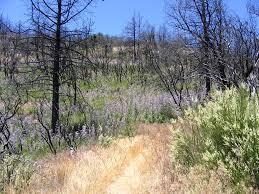 Wildfire Near Julian Ca by California Aaroads California 79