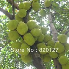 discount fresh fruit trees 2018 fresh fruit trees on sale at